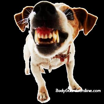 Надання першої допомоги при укусі собаки
