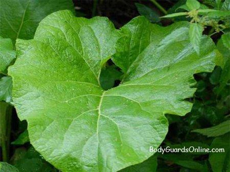 Рослини, що придатні в їжу, в умовах екстремального виживання.