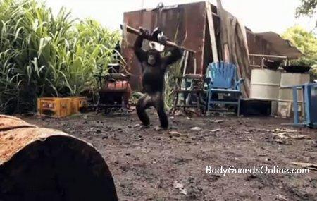 Пірати вирішили пограти з мавпою у войнушки